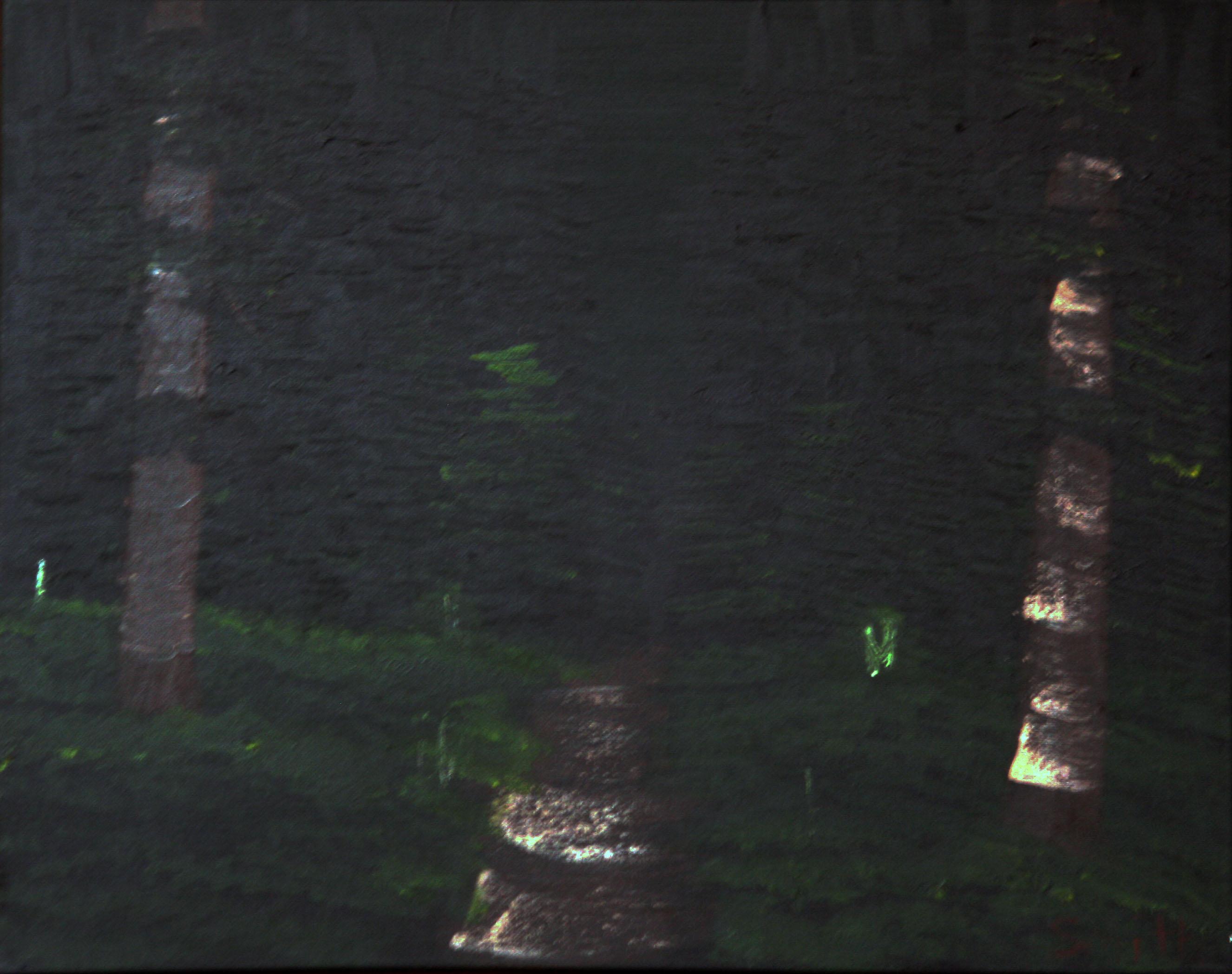Deep-Evergreen-Forest